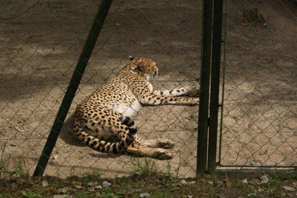 Dernières photos du Zoo