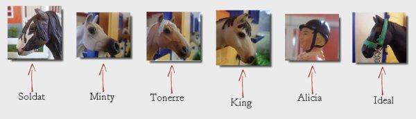 presentation du centre equestre