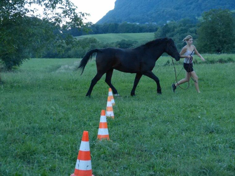 Little Pony comes back !!