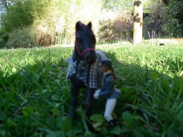 Présentation chevaux !