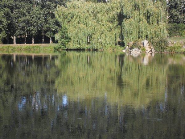 Étang du hérisson.(communale).