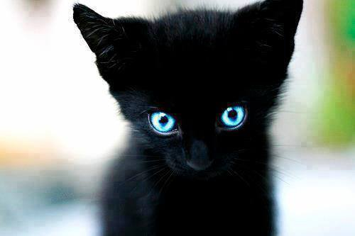 j'aime ce petit chat :3