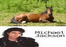 Photo de MJ-passionhorses67