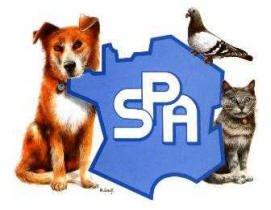 Nos chiens à l'adoption  à la SPA de St Omer (62500)