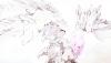 Fiction N°61 : SasuSaku-Angels