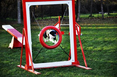 Les sports canins, on s'y tient !