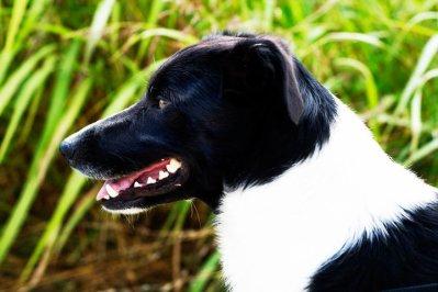 Un chien exeptionnel, à mes yeux.