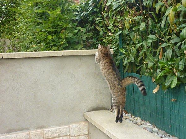 Etre un chat , retomber sur ses pattes , ronronner , demander des calins. Gribouille ; Quoi ! ♪
