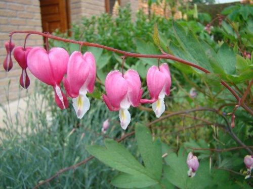Mes fleurs un 17 juin