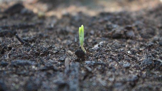 Comment accélérer la germination des graines ? Réponse ici:
