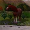 Haras-de-la-Prelaz--Sims