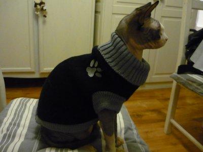 patron tricot manteau chat