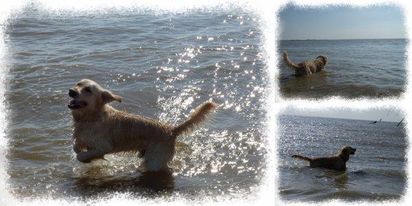 Ballade au bord de la mer :P