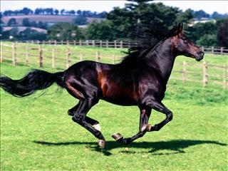 L'équitation <3