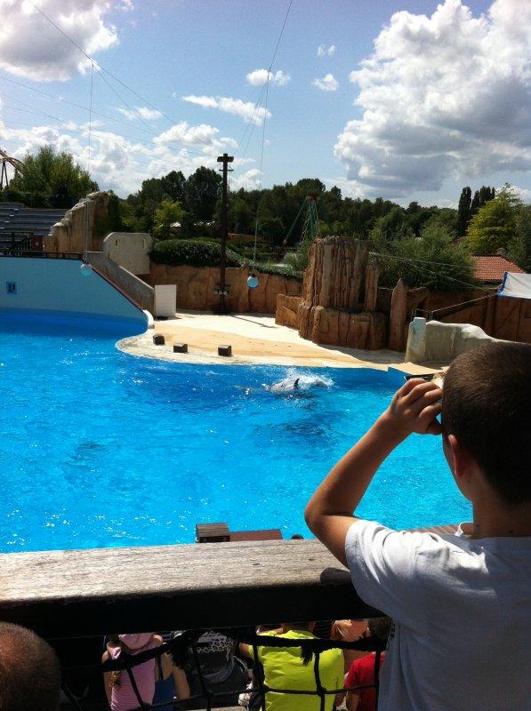 les dauphins du parc astérix aout 2012