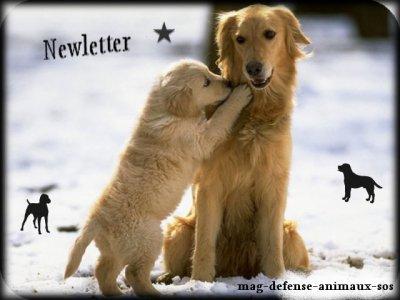 (l) Newsletter nouvelle régle nouvelle images (l)