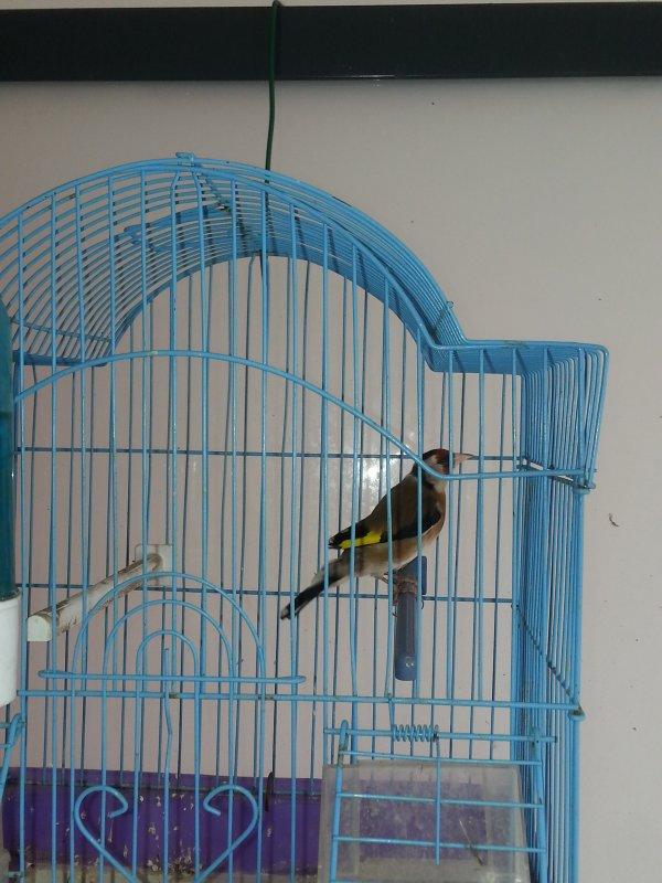 mais  oiseaux