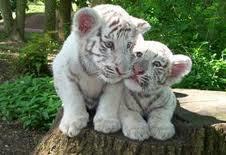 Les bébés félins
