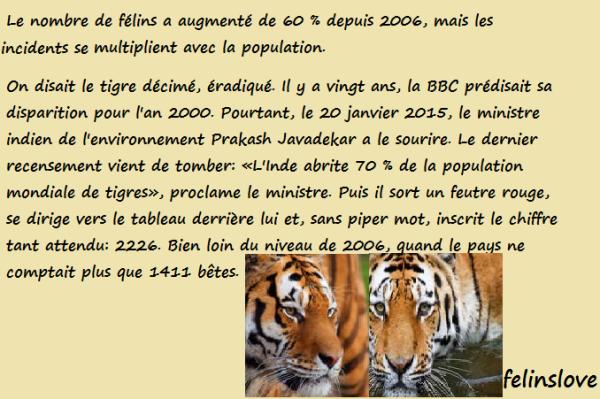 NEWS : Le tigre n'est plus ménacé d'extinction en Inde !