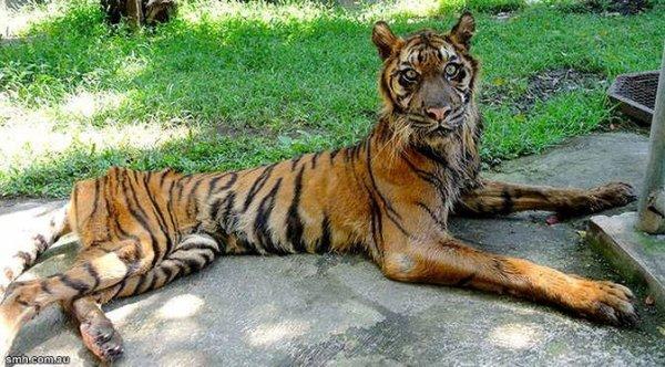 Le zoo de Surabaya, un enfer.