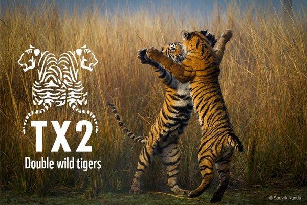 Conférence ministérielle en faveur des tigres en Asie !