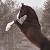 Horse-Worlds