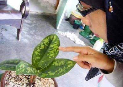 le nom de allah sur une plante