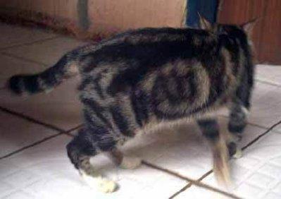 le nom de allah sur un chat