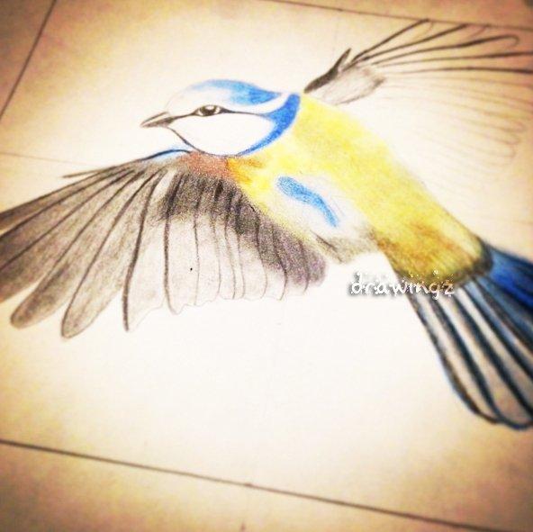 Oiseau. ♡