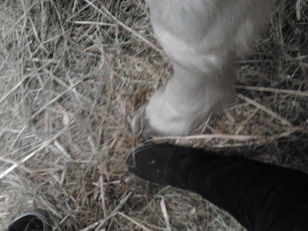 le pied de fidji et le mien <3