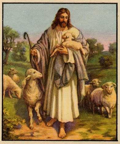 Adieu Pauvre Petit Mouton