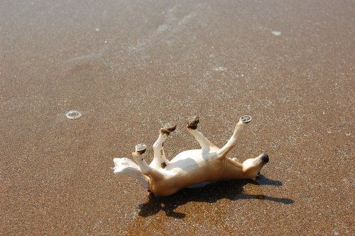 photo schleich sur la plage