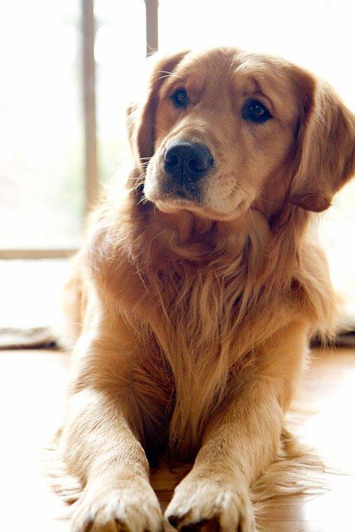 """mon chien """"bouli"""""""