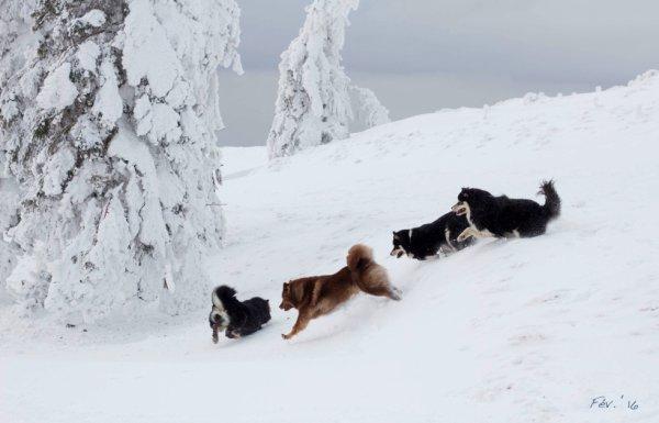 En balade, on est allés chercher la neige <3