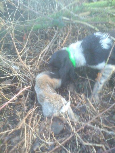 19/02/2012 dimanche matin au lapin !