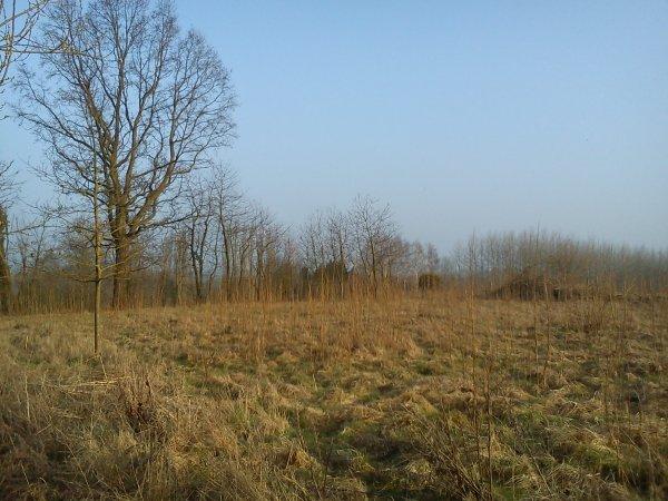 voila cette année j'ai 2 hectare33 autour de mon poste a pigeon !