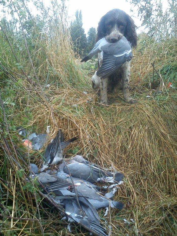 dimanche 14 octobre chasse aux pigeons improvisée !!!