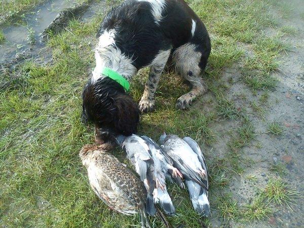 01/11/2012 petite matinée de chasse sous la pluie !