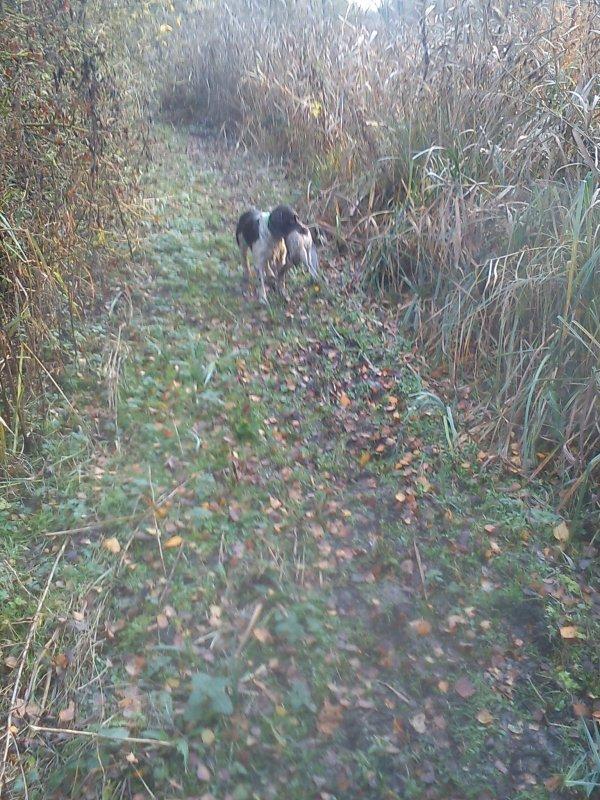 samedi 17 poste a pigeon et dimanche 18/11/2012  chasse au bois!!