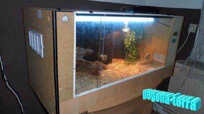 voici mon terrarium fait maison en bois cam l on. Black Bedroom Furniture Sets. Home Design Ideas