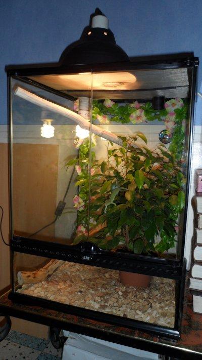 voici mon terrarium 60x45x45 avec une plante. Black Bedroom Furniture Sets. Home Design Ideas