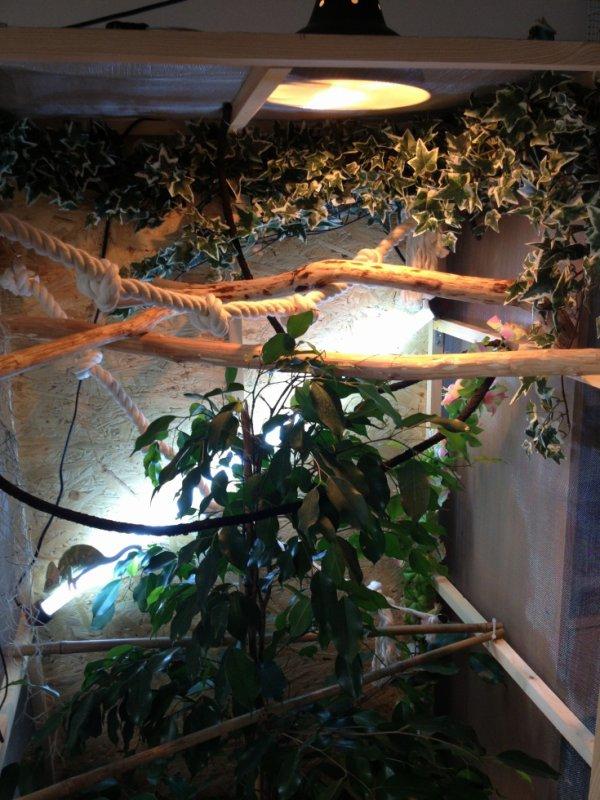 voici mon instalation de mon terrarium.vous enpense koi !!!