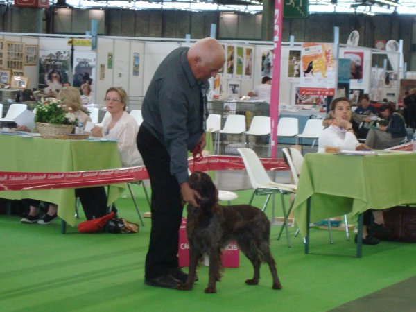 PARIS WORLD DOG SHOW 2011
