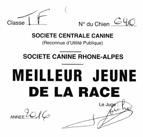 EXPOSITION CANINE VALENCE 2016
