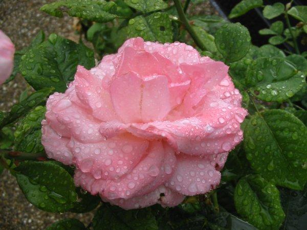 Après la pluie............