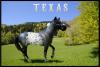 Beecher's Hope Texas - à vendre