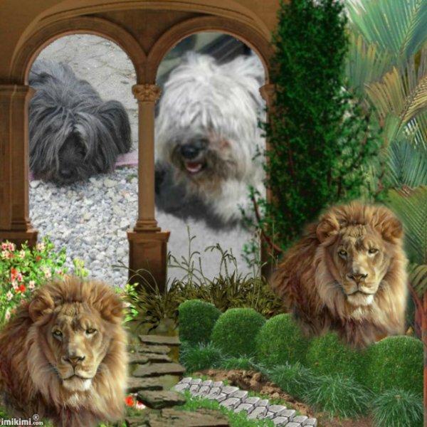 mes AMOURS au coeur de LION