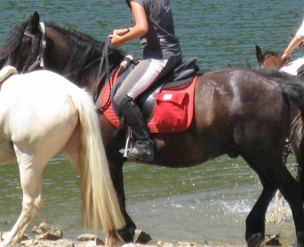 Randonné a Cheval en Aout 2009, a un Barage avec Fanfan :D
