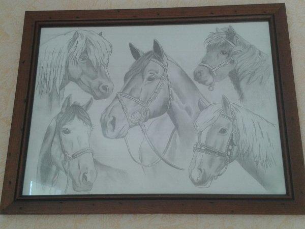 Et mes chevaux