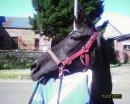 Photo de Xma-passion-equitationX
